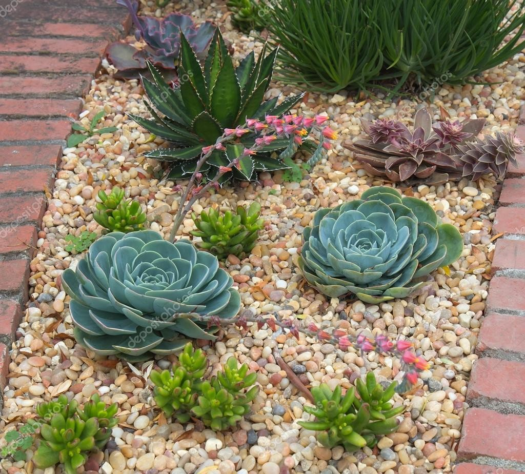 stock photo succulent plants garden